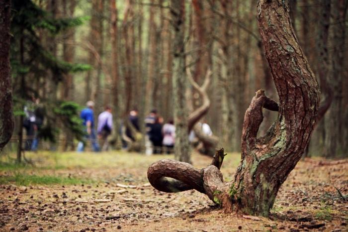 В чем причина аномалии именно в этом месте? /Фото:lithium.com