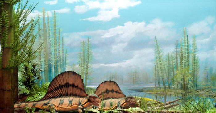 Около 300 млн.лет назад здесь были море и тропики.