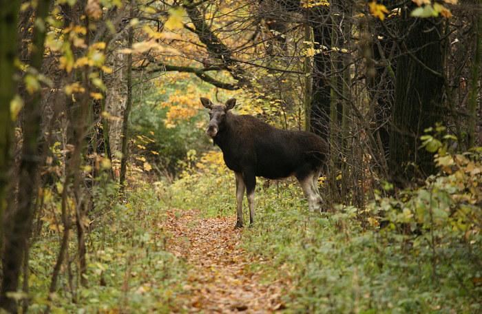 На поляне в Лосинке, по слухам, происходят невероятные чудеса, и животные обходят это место стороной. /Фото:places.moscow
