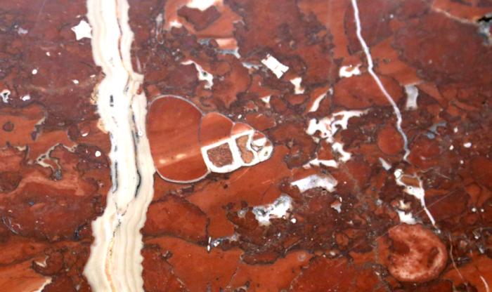 Гастроподы эпохи динозавров выглядели почти так же, как современные. Фрагмент мраморной поверхности, «Площадь Ильича». /Фото:mos.ru