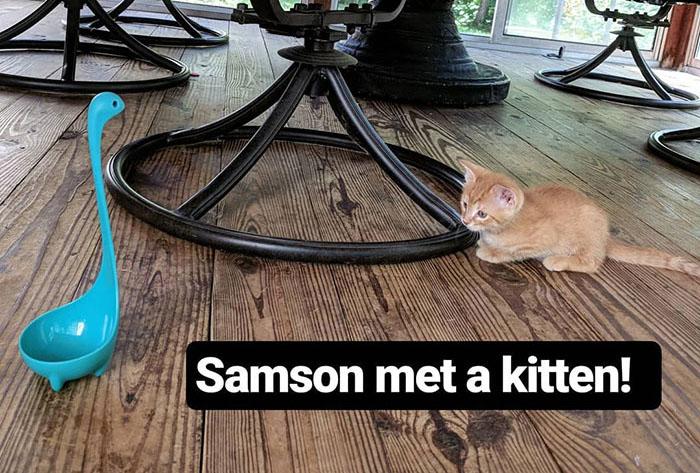 История Самсона доказывает, что даже обычный половник способен стать интернет-звездой. /Фото:instagram.com