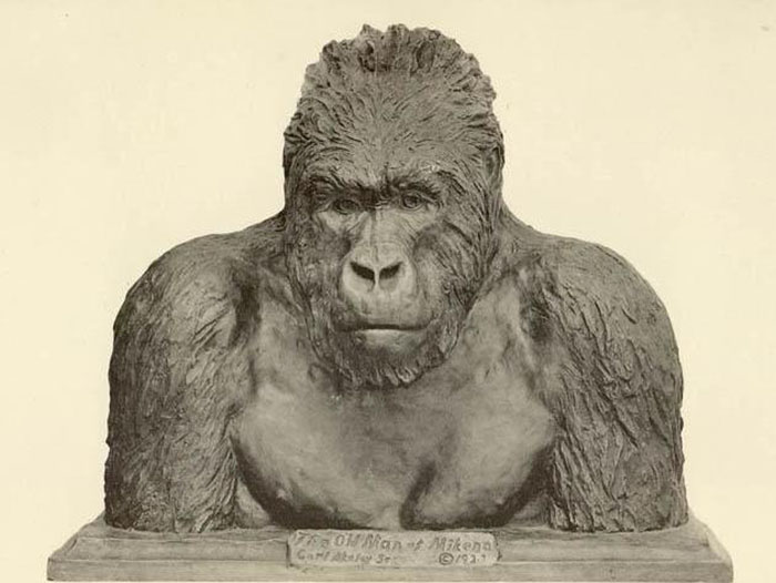 Пожилой обитатель Микено. Бронзовый бюст гориллы, изготовленный Карлом Эйкли