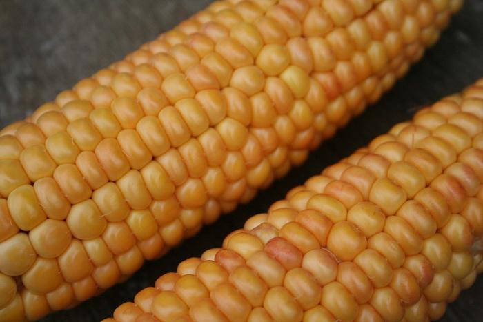 И то, что могло вдохновить древних строителей на технологию - зерна кукурузы