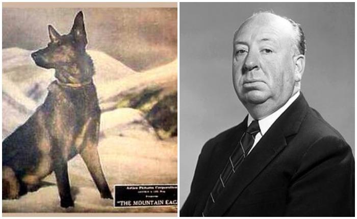 Сам Хичкок считал картину «Горный орел» неудачей, но историки кино с режиссером не согласны