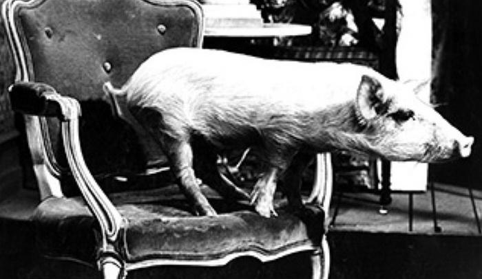Поросенок Арнольд - один из обладателей кинопремии «Пэтси»