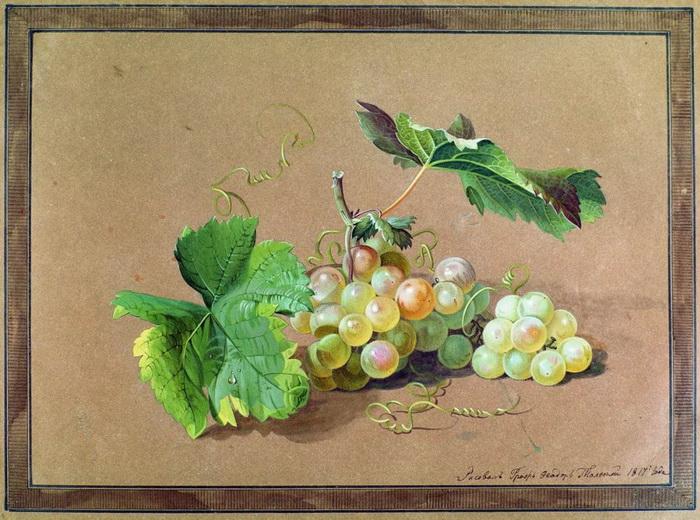 """Ф. Толстой """"Ветка винограда"""""""