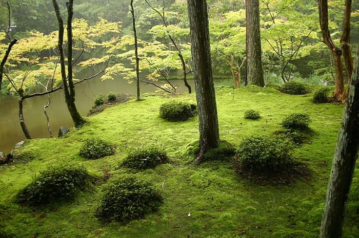 Сад монастыря Сайходзи славится своими мхами