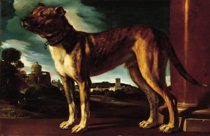 Гверчино. Портрет собаки Альдрованди