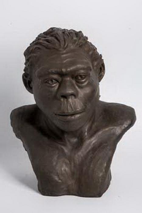 Питекантропы были выделены в отдельный подвид человека прямоходящего