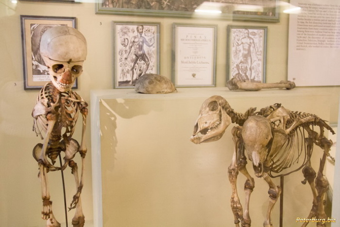 Экспонаты Кунсткамеры в Санкт-Петербурге