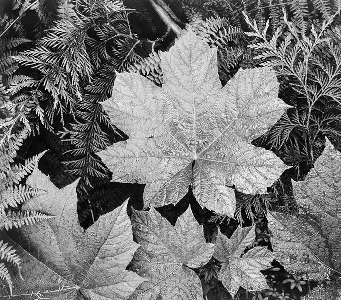 Листья в национальном парке Глейшер