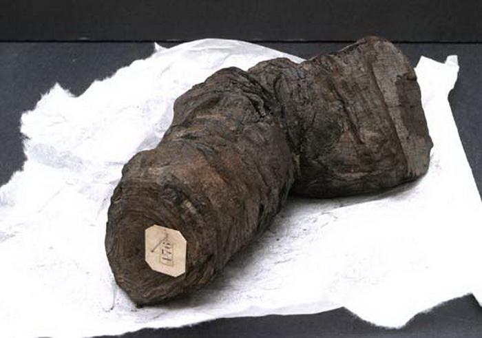 Обугленный папирус, найденный на вилле папируса в Геркулануме - городе, погибшем от извержения Везувия в I в.