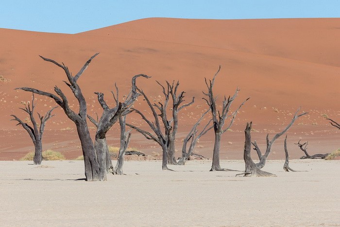 Пустыня Намиб на западе Африки содержит достопримечательность «Мертвый лес» - следы древнего оазиса, некогда расположенного на этом месте. Возраст черных деревьев составляет до 900 лет