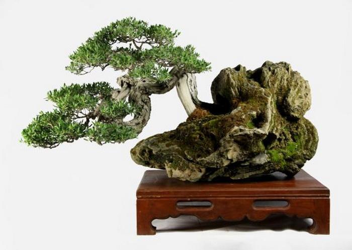 Бонсай - искусство выращивания копии настоящего дерева в миниатюре