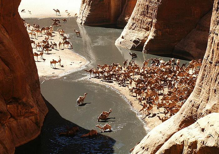 Гельта - отдельный вид оазиса в Северной Африке, водоем естественного происхождения. Гельта Аршей - не только источник воды для проходящих караванов, но и место обитания большого количества животных, в том числе крокодилов