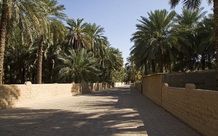 Широкие листья финиковой пальмы создают тень для других растений - и защищают от палящего солнца пустыни