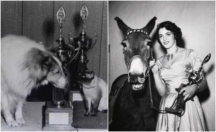Большинство победителей - собаки, кошки, лошади и приматы, но встречались и более экзотические для кино виды