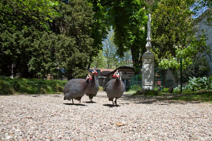 Дворик для птиц в Долмабахче