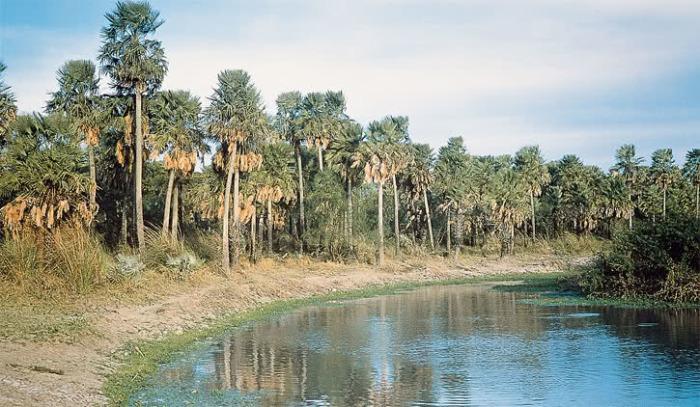 Регион Чако-Бореаль в Парагвае