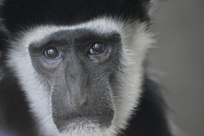 Во многих верованиях животные тоже считались носителями души