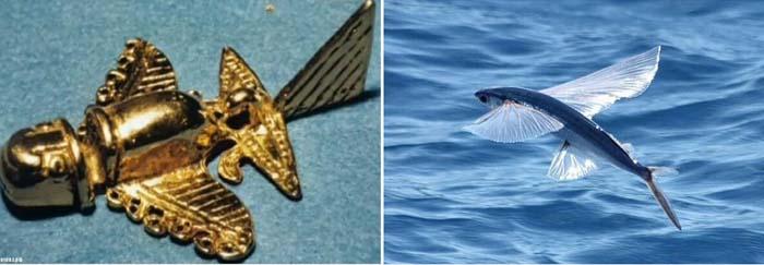 Историки уверены, что «золотые самолетики» - изображения только животных. Возможно, летучих рыб