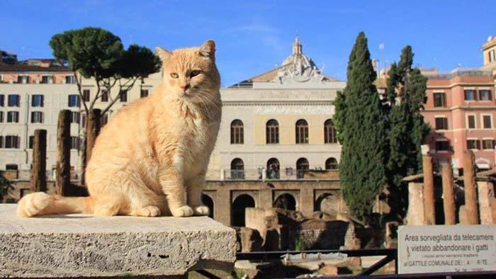Коты на площади Торре Арджентина в Риме живут при поддержке администрации города