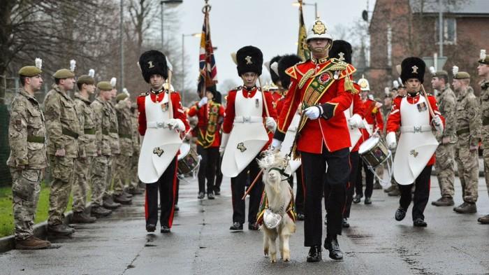Основные обязанности козла Уильяма Виндзора – участие в парадах