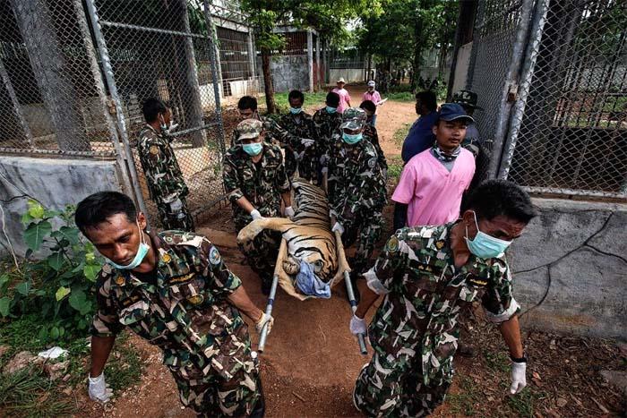 Вывоз животных из Тигриного монастыря, 2016 год
