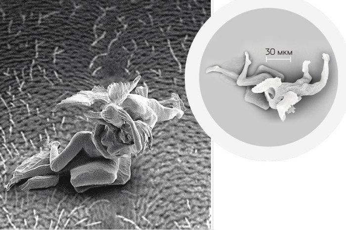 «Купидон и Психея», Джонти Гурвиц, размеры 0,1 х 0,09 х 0,1 мм. Наноскульптура создана по мотивам шедевра итальянского классика Антонио Кановы.