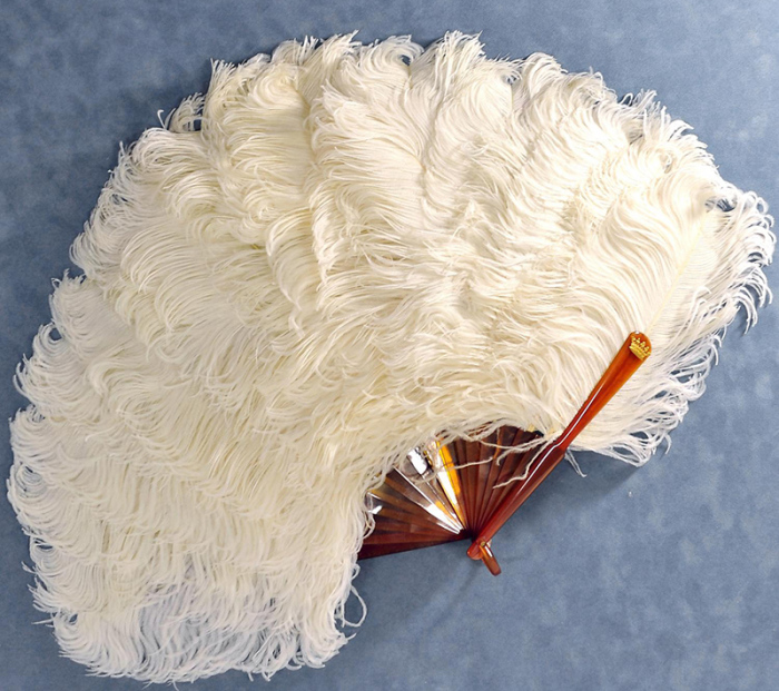 В XIX веке бум на веера из страусовых перьев даже привел к значительному сокращению популяции страусов