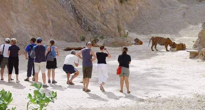 До недавнего времени в Тигрином монастыре можно было вблизи понаблюдать за жизнью этих животных