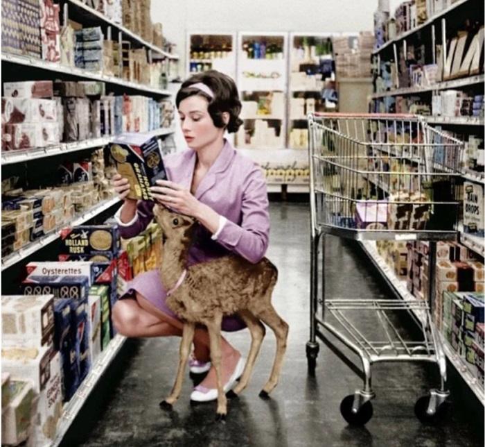 На популярных фото - Одри Хепберн с ручным оленем