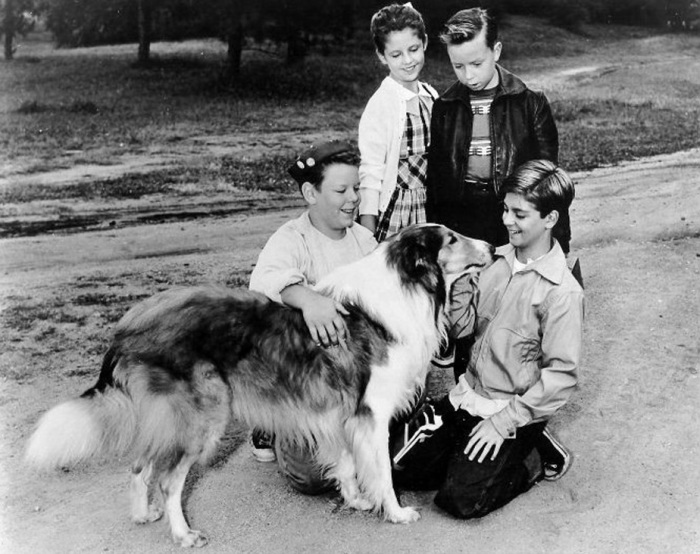 В студии на съемках сериала «Лесси», 1956 год