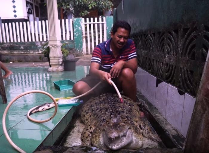 Крокодил Коджек очень любит, когда хозяин моет его