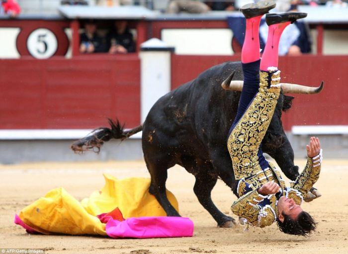 Коррида – это бой, в котором матадор также рискует жизнью