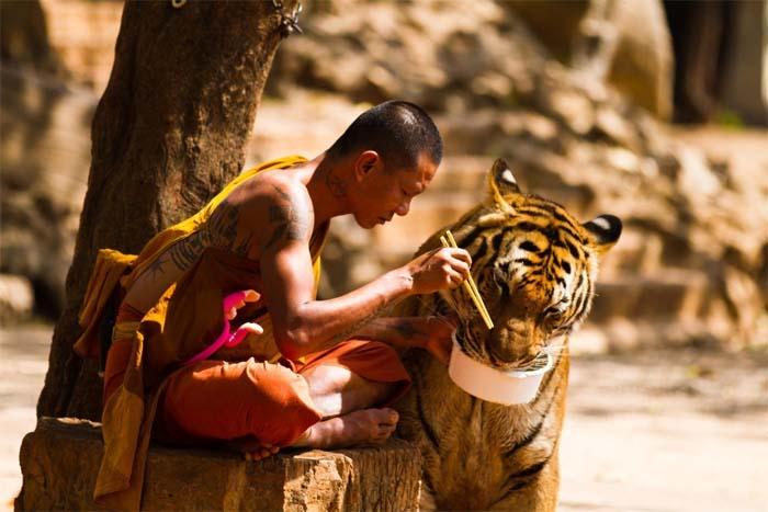 Статьи о «тигрином рае» до сих пор широко тиражируются в сети