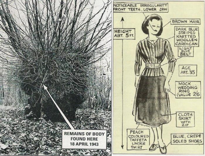Ведьмин вяз (фото из газеты 1943 года) и описание погибшей, составленное со слов судмедэкспертов