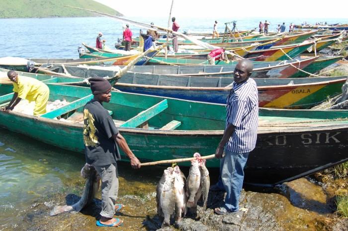 Около 100 лодок каждое утро отправляются на ловлю рыбы