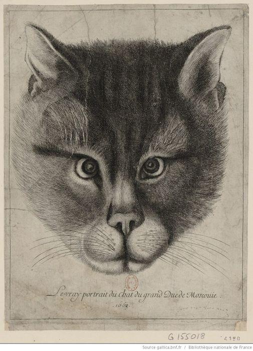 Вацлав Холлар. Подлинный портрет кота Великого князя Московского, 1663 год, Национальная библиотека Франции