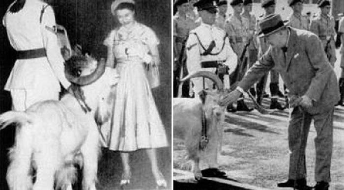 Молодая королева Елизавета II угощает Билли сигаретами / Уинстон Черчилль гладит Билли (1953 год)