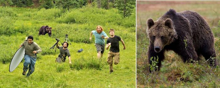 Медведь, преследующий группу фотографов National Geographic и исходное стоковое изображение