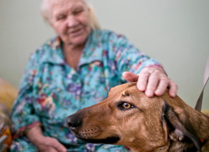 Собаки могут подарить пожилым людям массу положительных эмоций