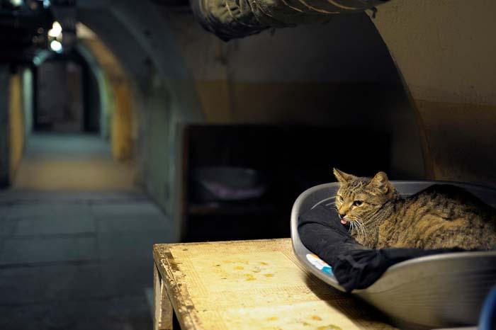 Отдельной статьи расходов на эрмитажных котов нет, их кормят на собранные пожертвования