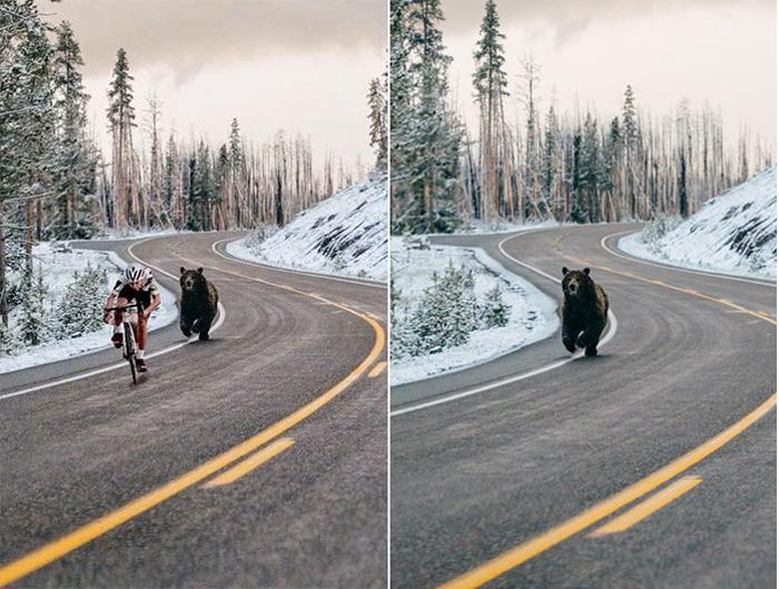 Фотография медведя, преследующего велосипедиста – это также фотомонтаж. Исходный снимок был сделан в Национальном парке Йеллоустон.
