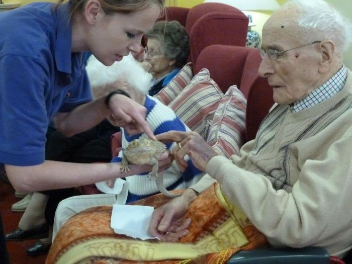 In other countries, various exotic animals are brought to nursing homes.