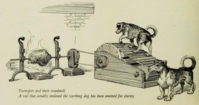 Иллюстрация - описание вертельных собак и их труда в книге XIX века