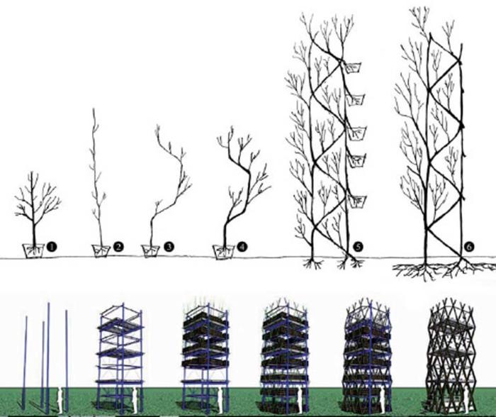 Постройка многоэтажной зеленой башни – один из последних проектов, созданных арбоархитекторами