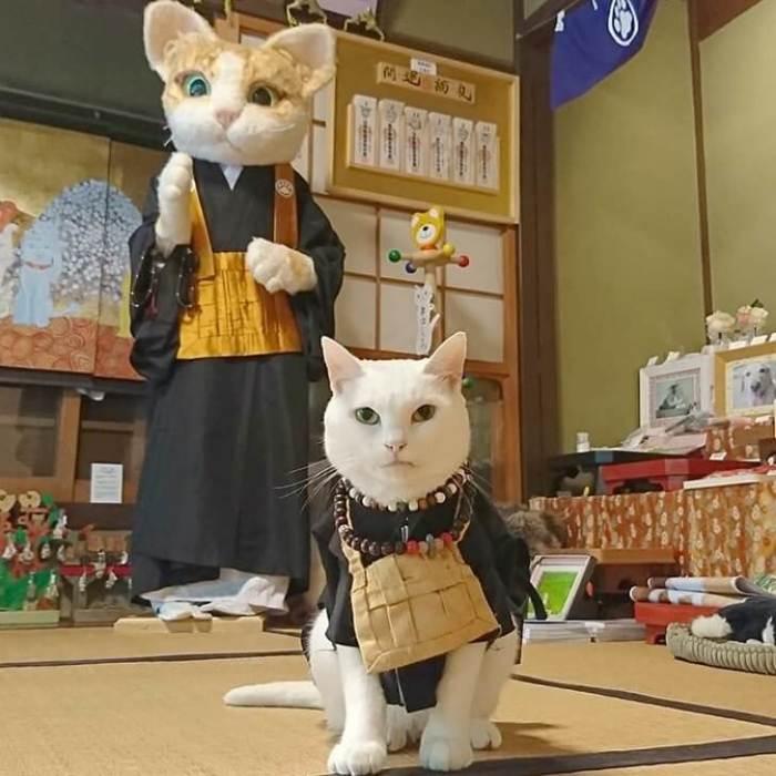 Коюки – главная фигура Храма Кошек в Японии