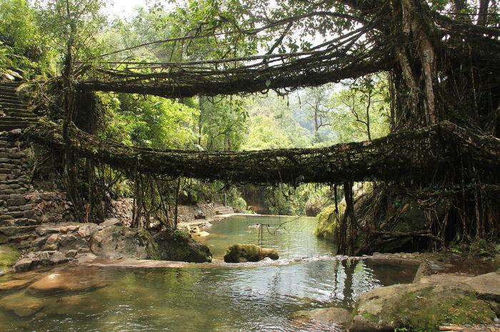 Двухъярусный мост из живых корней деревьев в деревне Нонгриат, штат Мегхалая, Индия
