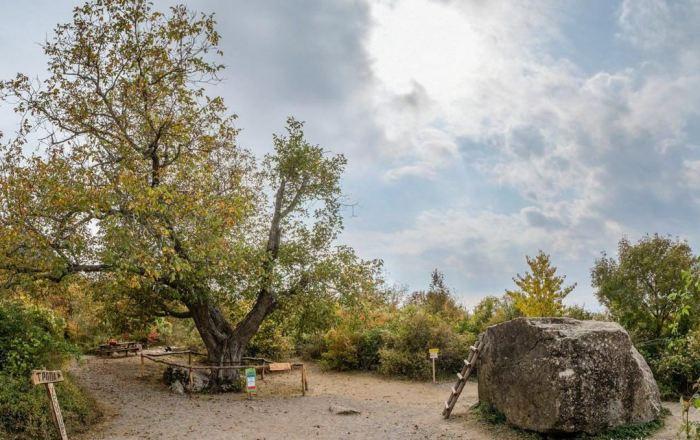 Места туристического паломничества в Крыму –«Орех Никулина» и «Камень Нины», на котором она пела песенку о медведях
